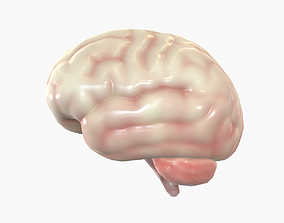 Human Brain 3D model VR / AR ready