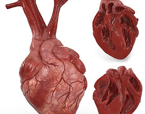 Human Heart and 2 Heart Sections 3D model low-poly