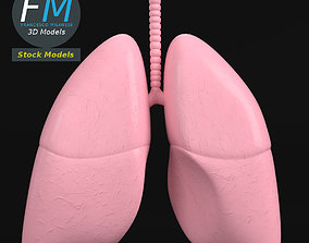 Anatomy - Human lungs 3D model