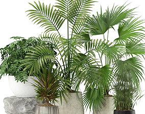 Plants collection 353 3D model