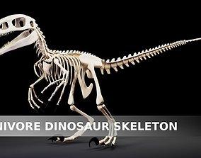 3D model Carnivore Dinosaur Skeleton