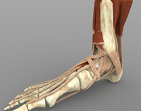 3D Ankle Joint