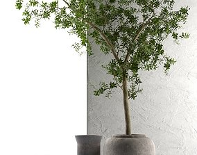 3D tree Outdoor Pots with Olive Tree