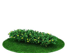 3D Plant Flowering Shrub