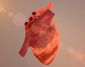 Heart 3D MODEL 3d