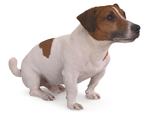 3D model Jack Russell Sitting