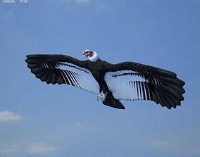 Andean Condor Vultur Gryphus 3D asset