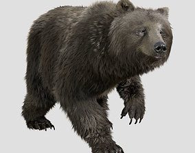 3D model grizzly bear rig anim