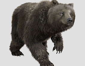 grizzly bear rig anim 3D