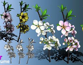 3D model Flower Prunus Mume