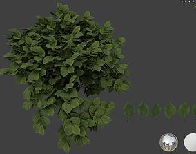 Ulmus leaf 3D models