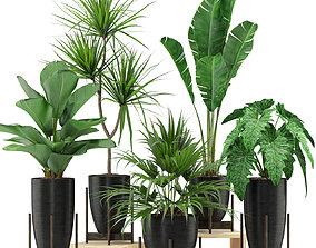 3D Plants collection 352