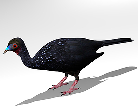 3D Crested guan
