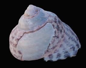 Tessellate Nerita Sea Shell 3D model