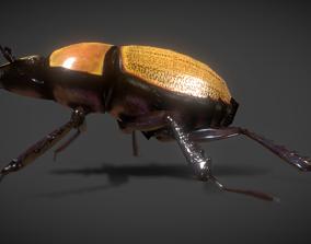 3D model scarab beetle
