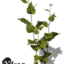 XfrogPlants Garlic Mustard 3D