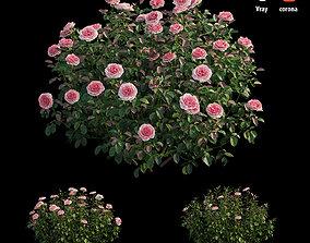 3D Rose plant set 28