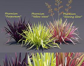 3D Phormium