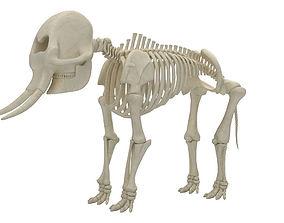 Elephant Skeleton 3D model