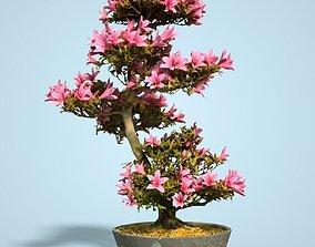 3D asset Satsuki Bonsai Tree Blossom 11