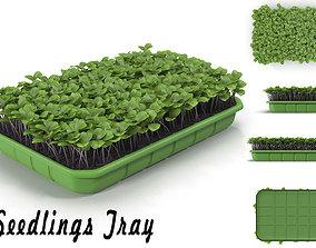 Seedlings Tray 2 3D