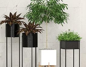 3D model garden Room plants
