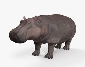 3D model Hippopotamus High Detailed