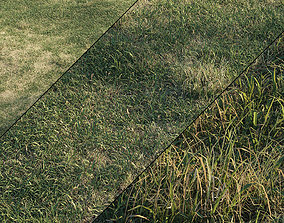 Meadow grass 3D model