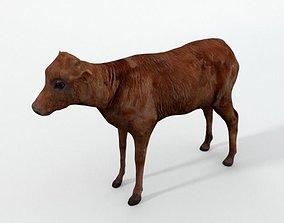 3D asset Calf Mammal