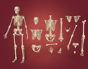 spine 3D Human Skeleton