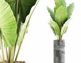 3D model Plants Collection 59