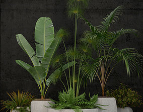 Plants collection 80 3D model