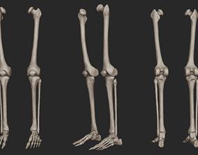 Human Skeletal Leg High Poly 3D