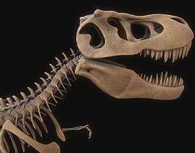 3D model T-rex Skeleton dinosaur