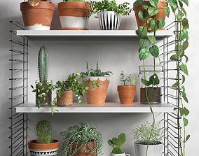 Shelves with Plants 3D model