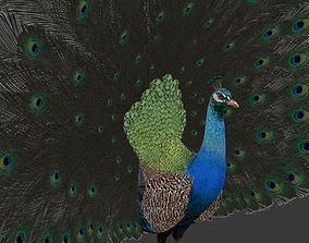 peacock 3D model low-poly