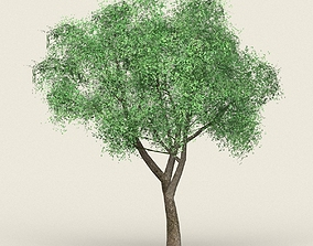 Game Ready Forest Tree 18 3D asset