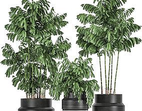 Decorative palm Chamaedorea in flowerpots 795 3D