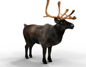 Fur Black Reindeer Blender 3D model