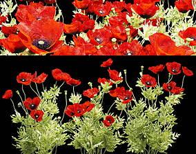 Field poppy 3D