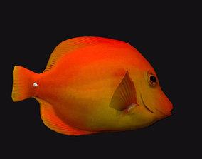 Gold Cheek Butterfly Fish 3D asset