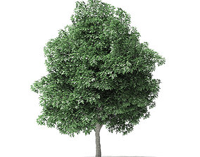 Boxelder Maple Tree 3D Model 8m leaf