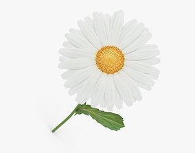 plant Daisy 3D
