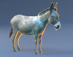 Donkey Fur Hair Rigged 3D model