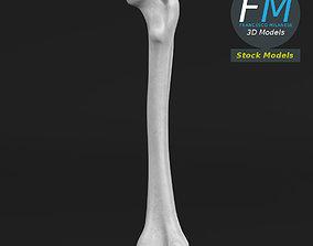 Anatomy - Femur Thig Leg bone 3D