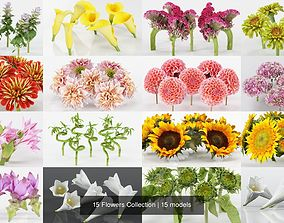 15 Flowers Collection 3D model