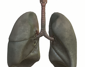 Lungs Smoker 3D asset