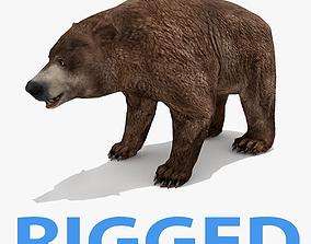 Bear - Rigged 3D model