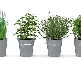 Herbs 3D realistic