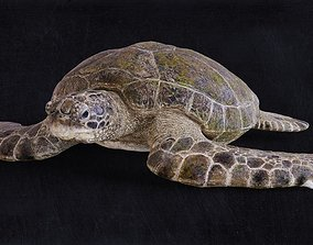 Realistic Turtle high res 3D model